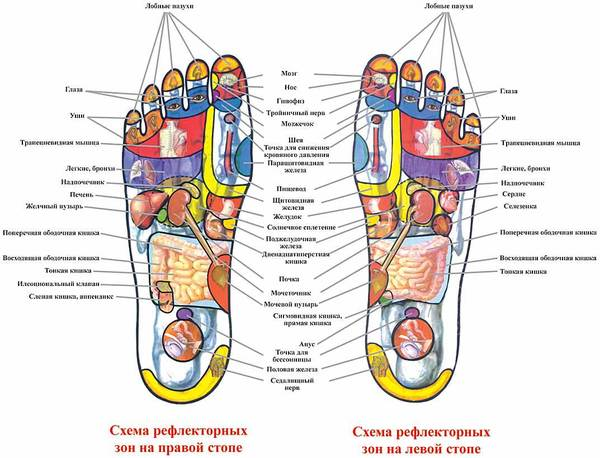 reflexology dissertation Cognitive science quarterly,  goodwin, c professional doctoral reflexology dissertation vision.